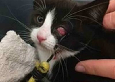 snelbinder raakt oog kat